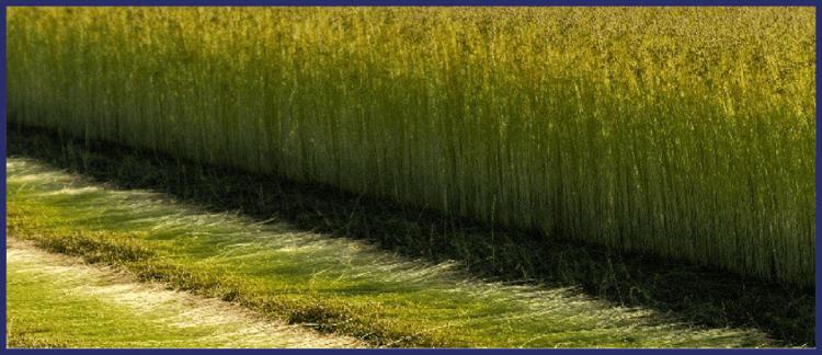 flax linen retting