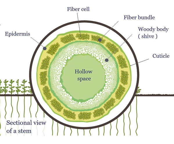 sectional view of flax cell